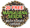 free cannabis seeds