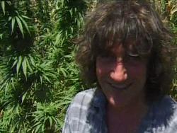 mr nice cannabis seeds