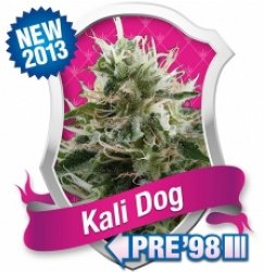 kali dog feminised marijuana