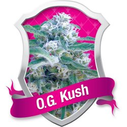 o.g. kush feminized marijuana