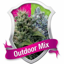 Royal Queen Outdoor Mix Feminised Marijuana