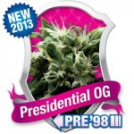 presidential O.G. Royal Queen Feminised Marijuana