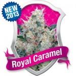 royal caramel feminised royal queen marijuana