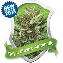 Royal Queen Royal Cheese Automatic Feminized Marijuana
