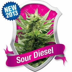 Royal Queen Sour Diesel Feminized Marijuana