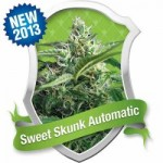 Royal Queen Sweet Skunk Autoflowering Feminized Marijuana